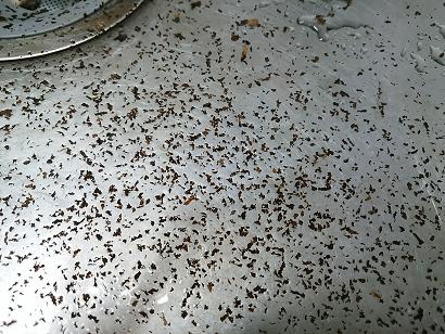 焙煎は結構汚れる
