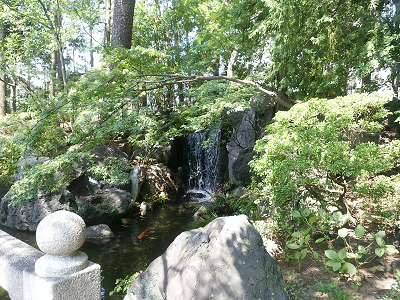 西新井大師の池