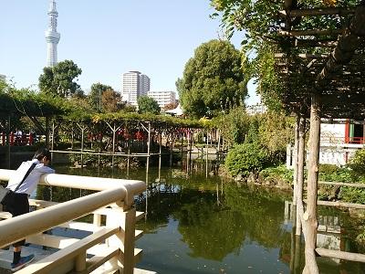 亀戸天神社の池