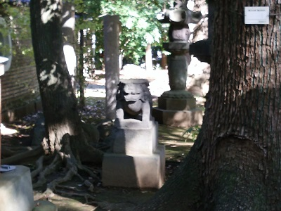 氷川神社の狛犬(右)